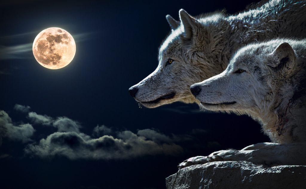 Het verhaal van de 2 wolven.